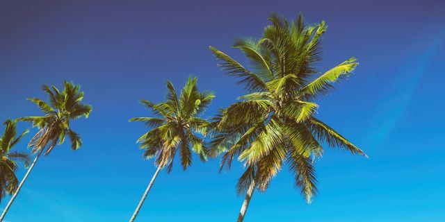 Guide d'achat vaisselle feuille de palmier   Vivre Bambou