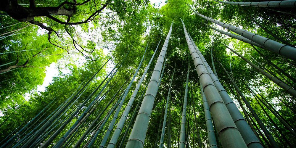 Vaisselle en bambou interdite : les alternatives !   Vivre-Bambou.com